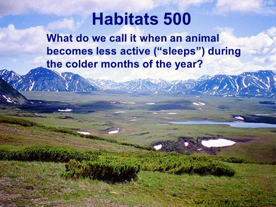 Habitats 500 What do we call it when an animal becomes less active (sleeps) during the colder months of the year