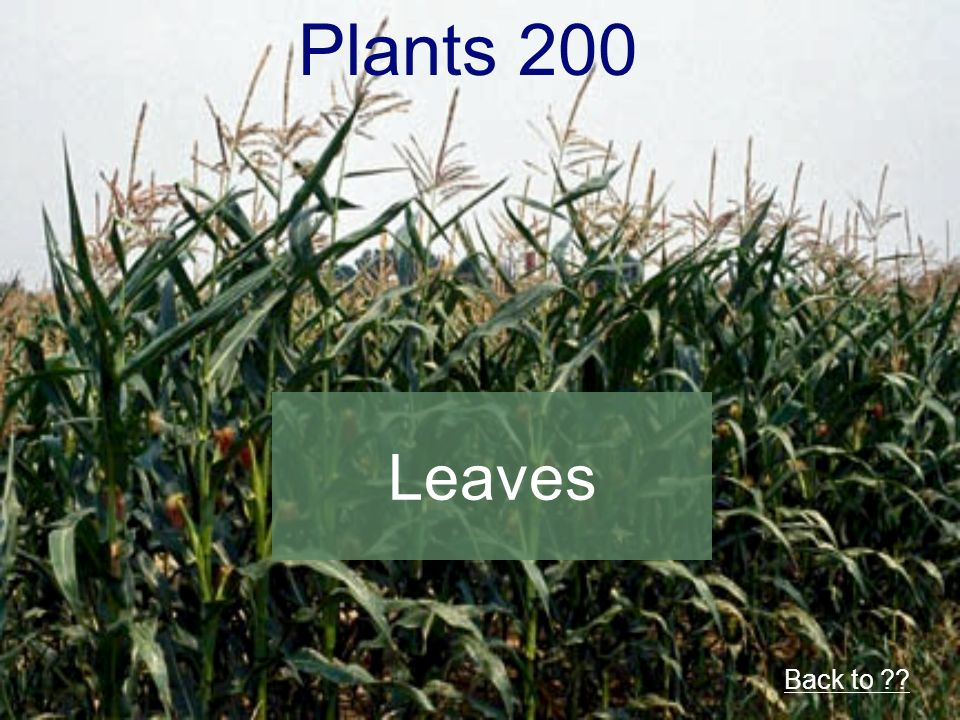 Plants 200 Back to Leaves