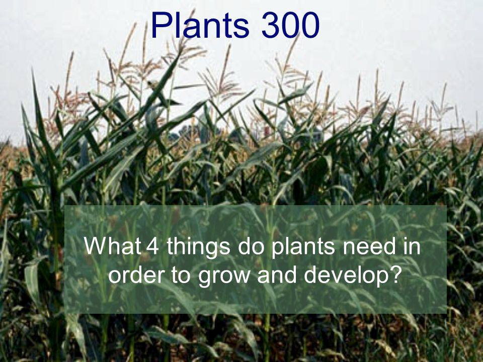 Plants 300 What 4 things do plants need in order to grow and develop