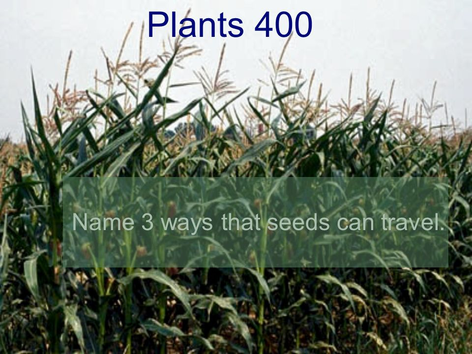 Plants 400 Name 3 ways that seeds can travel.