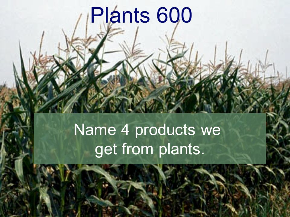 Plants 600 Name 4 products we get from plants.