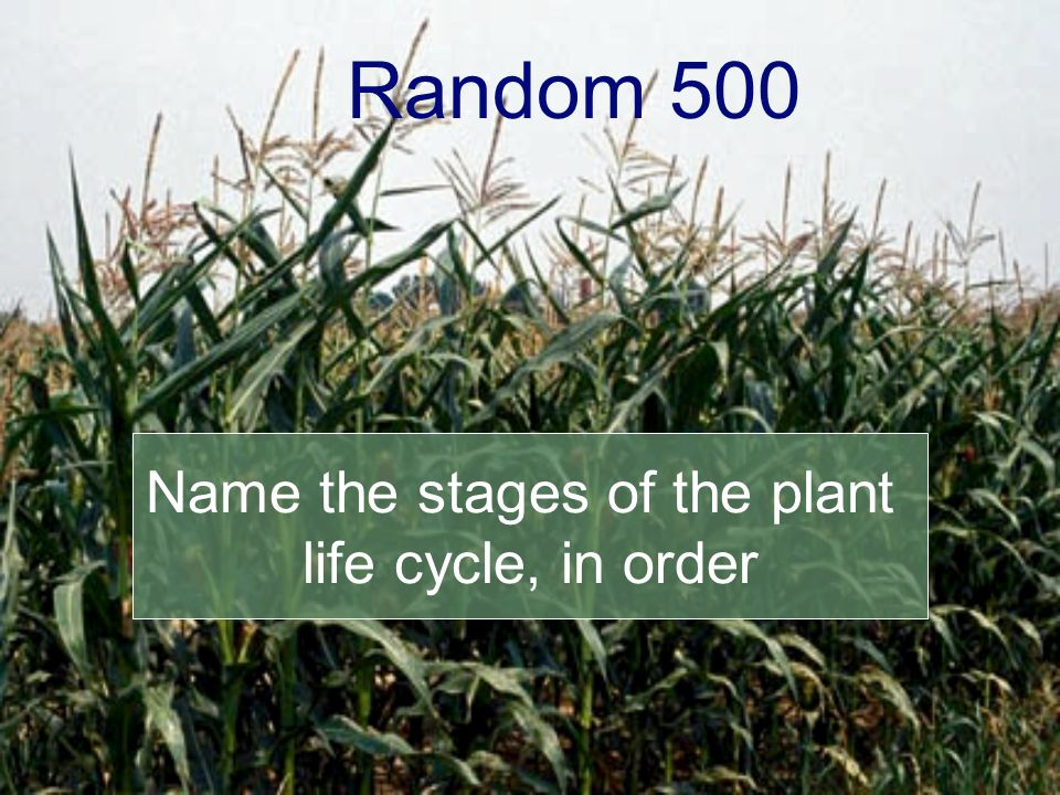 Random 500 Name the stages of the plant life cycle, in order