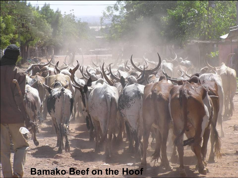 Bamako Beef on the Hoof