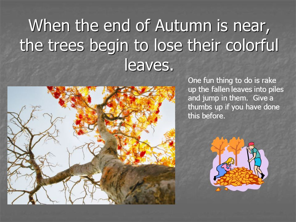 When the end of Autumn is near, the trees begin to lose their colorful leaves. One fun thing to do is rake up the fallen leaves into piles and jump in