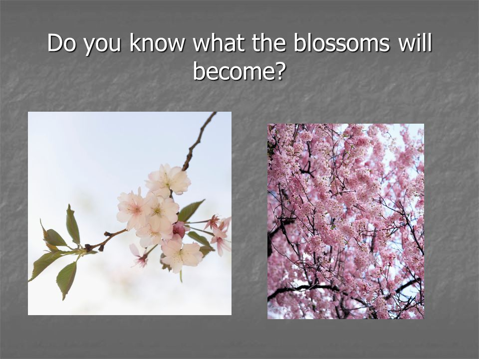 Do you know what the blossoms will become?