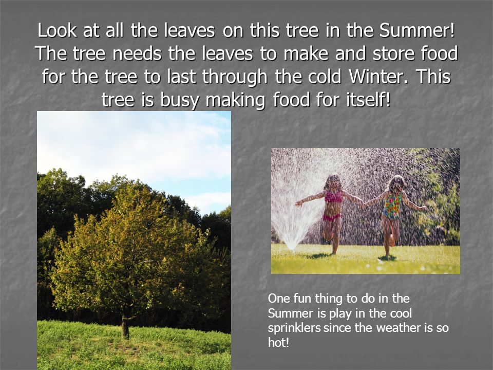 Look at all the leaves on this tree in the Summer! The tree needs the leaves to make and store food for the tree to last through the cold Winter. This