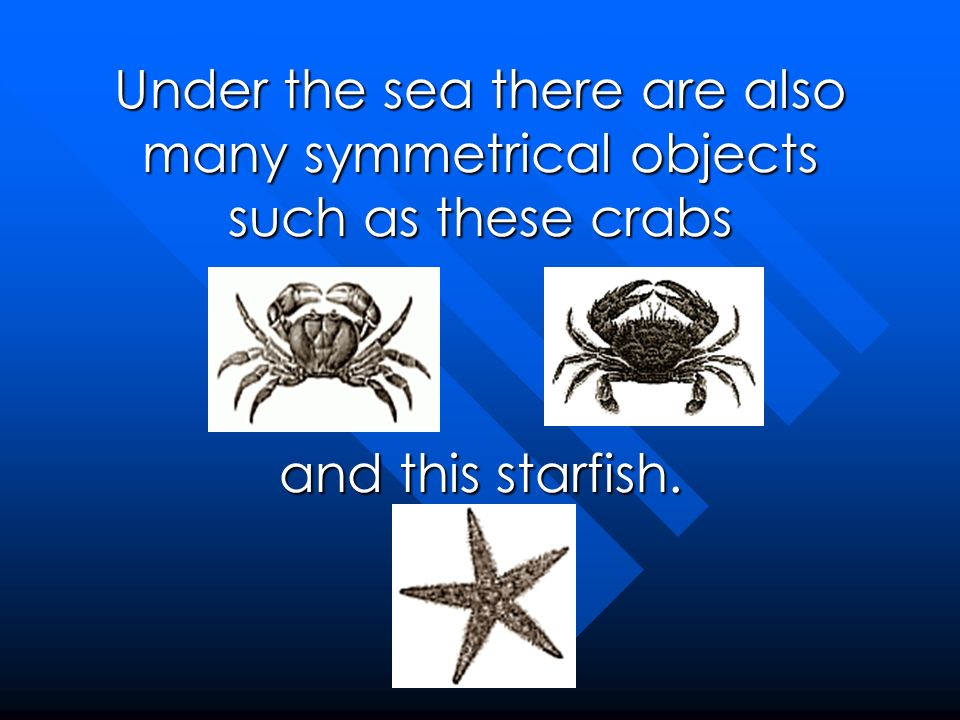 Under the sea there are also many symmetrical objects such as these crabs and this starfish.