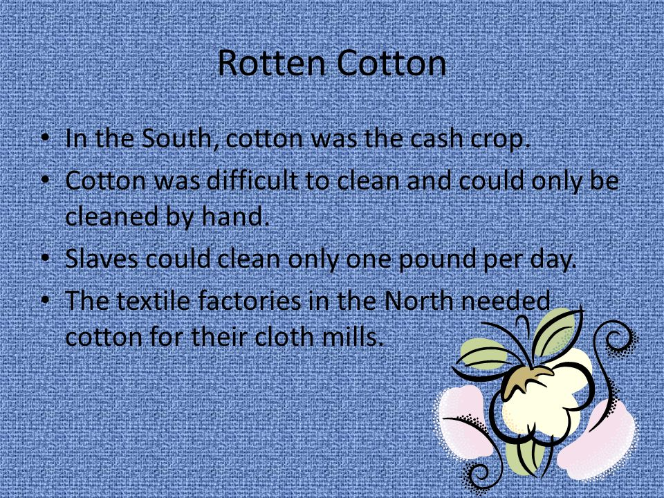 Rotten Cotton In the South, cotton was the cash crop.