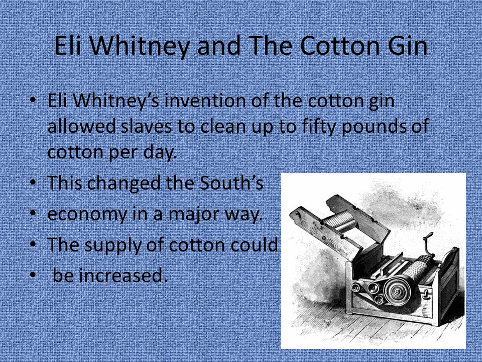 Eli Whitney and The Cotton Gin Eli Whitneys invention of the cotton gin allowed slaves to clean up to fifty pounds of cotton per day. This changed the