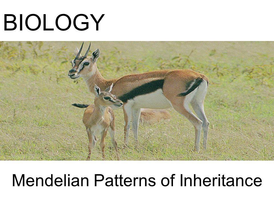 Mendelian Patterns of Inheritance BIOLOGY