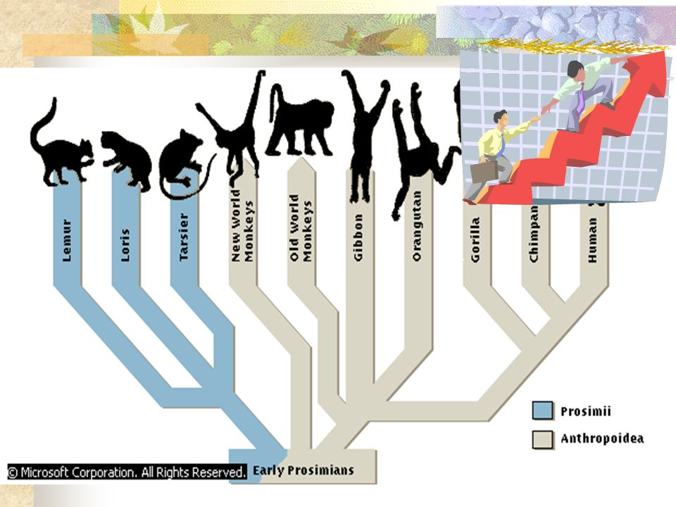 Mammals arise from Theraapsids