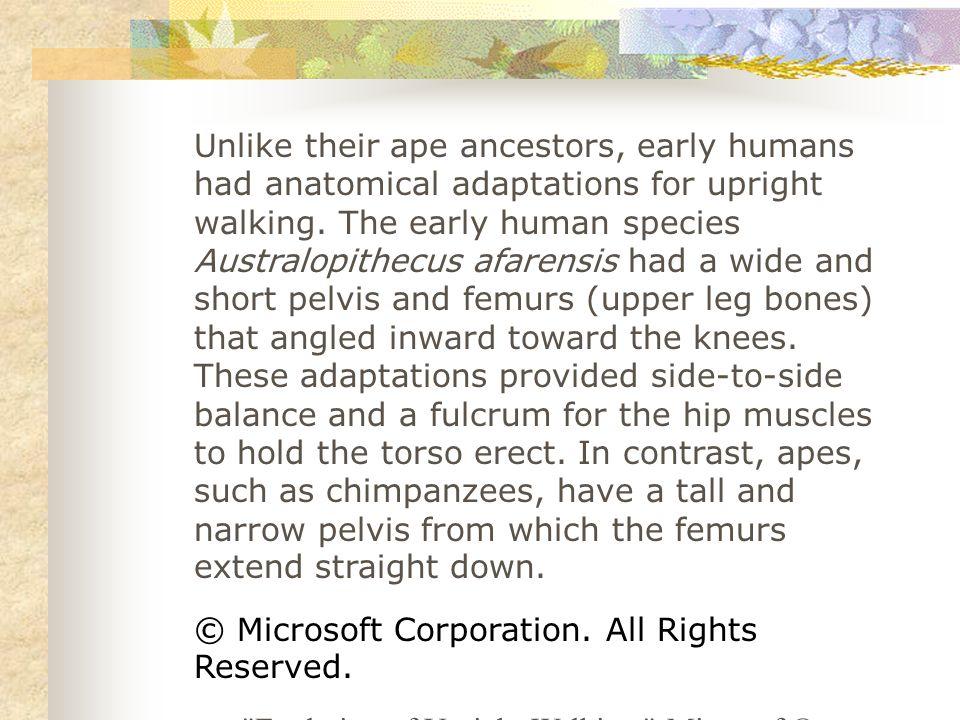 Walking upright: