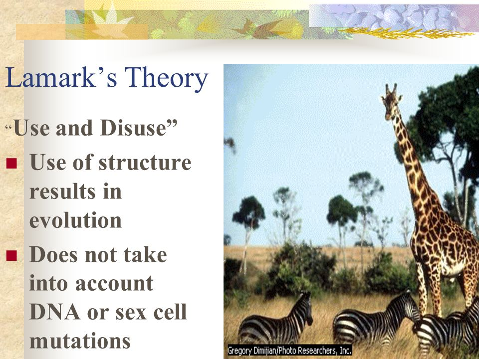 Early Theories of Evolution: Darwin: Current theory Natural Selection Survival of fit Reproduction of the best adapted species Lamark: Use & Disuse Ab