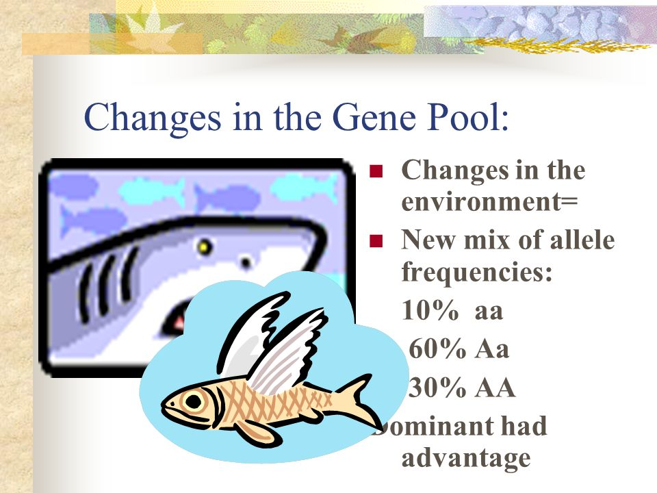 Gene pool? Group of reproducing organisms Specific frequency of allele types: 25% AA 50% Aa 25% aa