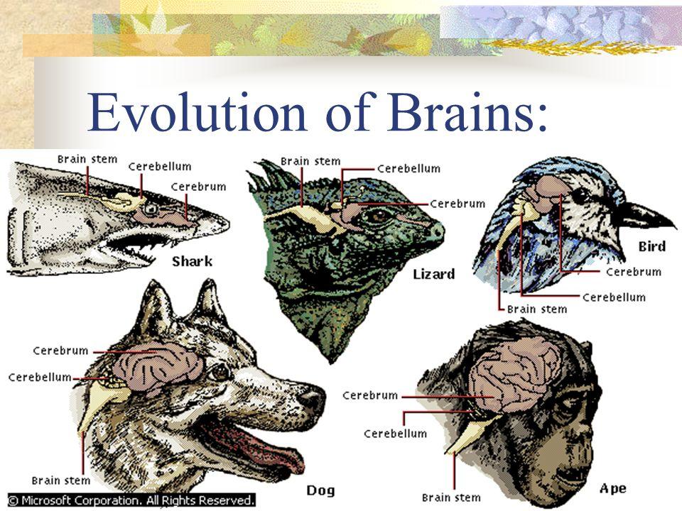 Evolution of Air Breathing:
