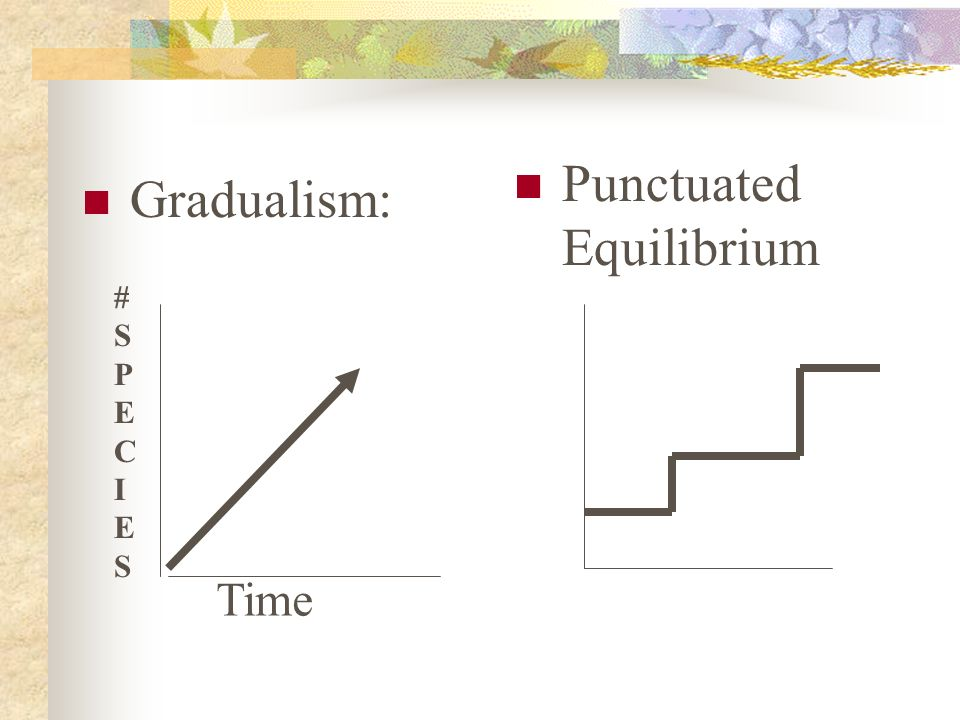 Punctuated Equilibrium punctuation! Large changes Happen rapidly Periods of no change