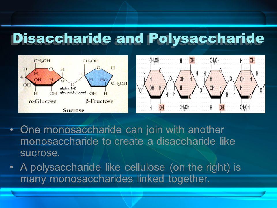 Disaccharide and Polysaccharide Disaccharide and Polysaccharide One monosaccharide can join with another monosaccharide to create a disaccharide like
