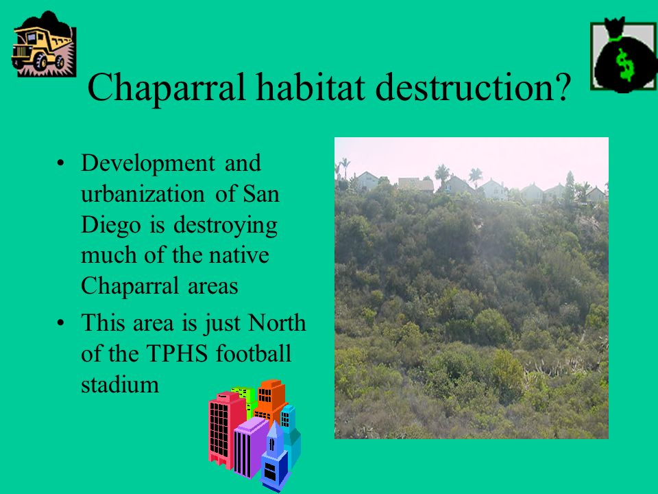 Chaparral habitat destruction? Development and urbanization of San Diego is destroying much of the native Chaparral areas This area is just North of t