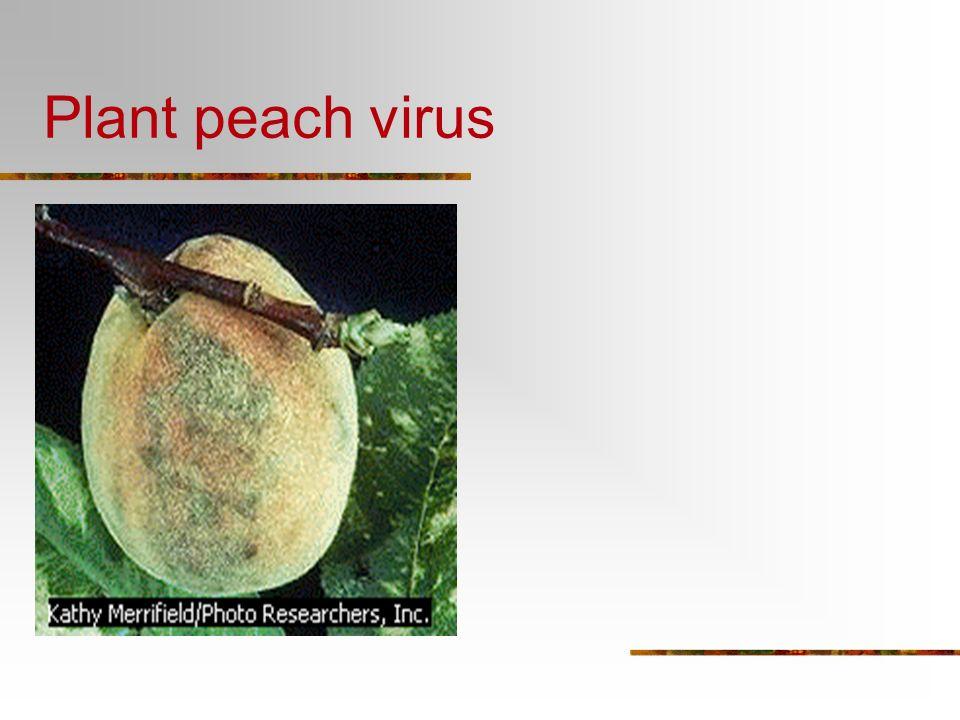 Warts are a skin virus!