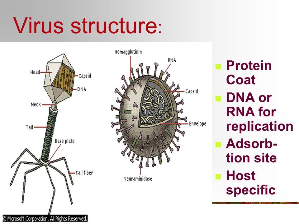 Hepatitis B virus (Liver)