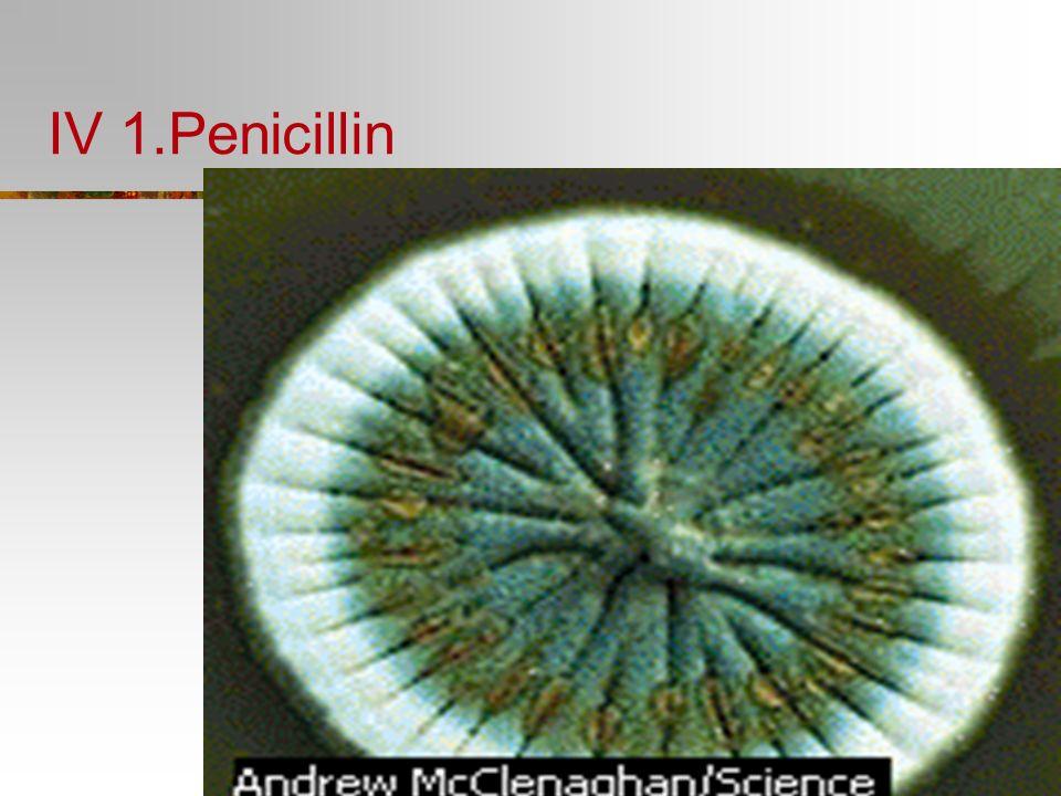 Bacteria Kingdom Characteristics: Archaebacteria Extremists No free oxygen Methane producers Saline habitats Hot sulfur springs Eubacteria Heterotroph