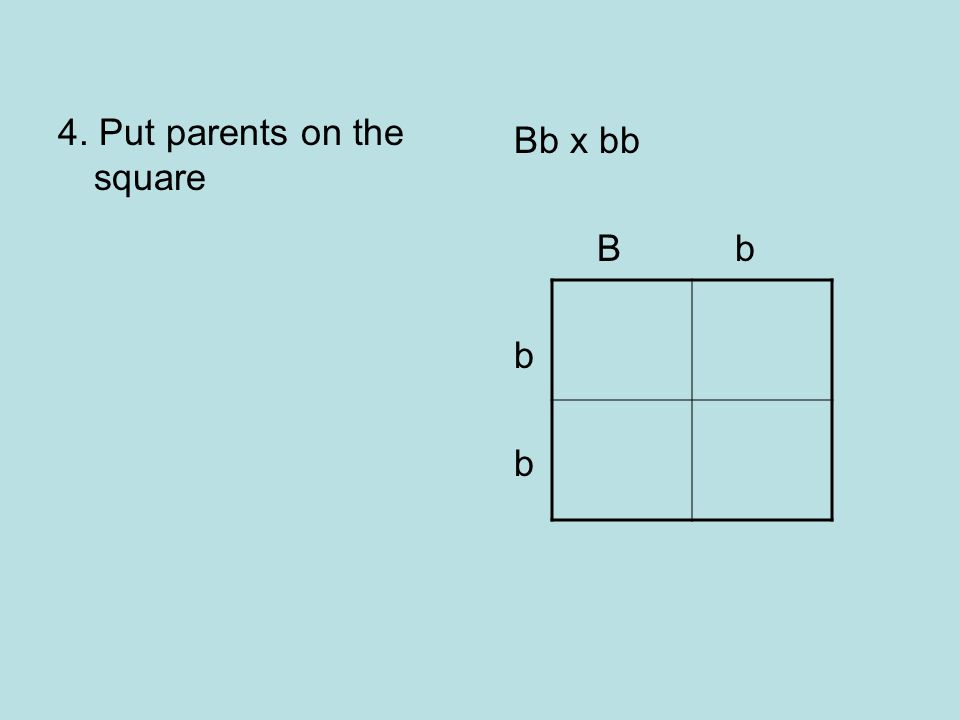 4. Put parents on the square Bb x bb B b b