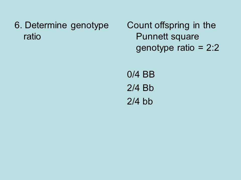 6. Determine genotype ratio Count offspring in the Punnett square genotype ratio = 2:2 0/4 BB 2/4 Bb 2/4 bb