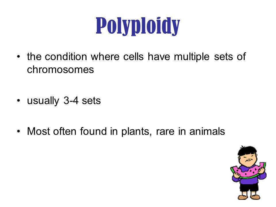 Examples of Polyploidy Diploid & tetraploid many plants Octoploidy strawberries Triploid seedless watermelon