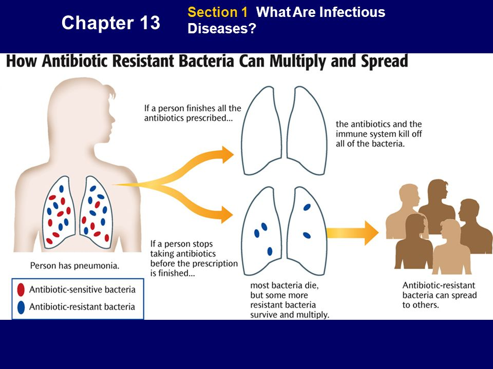 Chapter 13 Section 1 What Are Infectious Diseases?