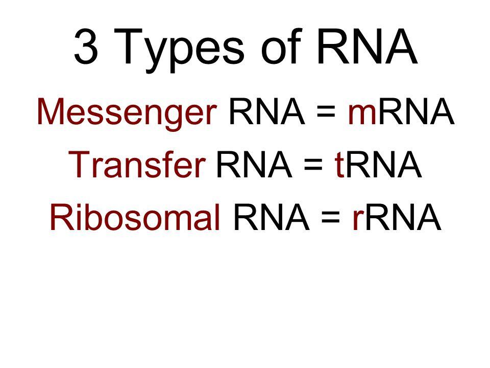3 Types of RNA Messenger RNA = mRNA Transfer RNA = tRNA Ribosomal RNA = rRNA