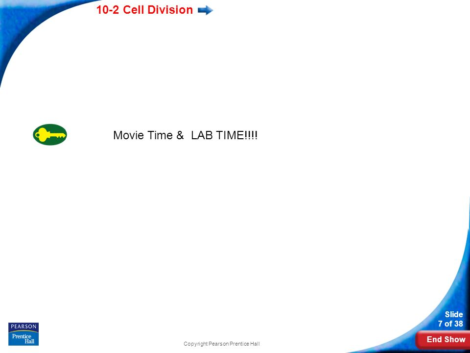 End Show 10-2 Cell Division Slide 7 of 38 Copyright Pearson Prentice Hall Movie Time & LAB TIME!!!!