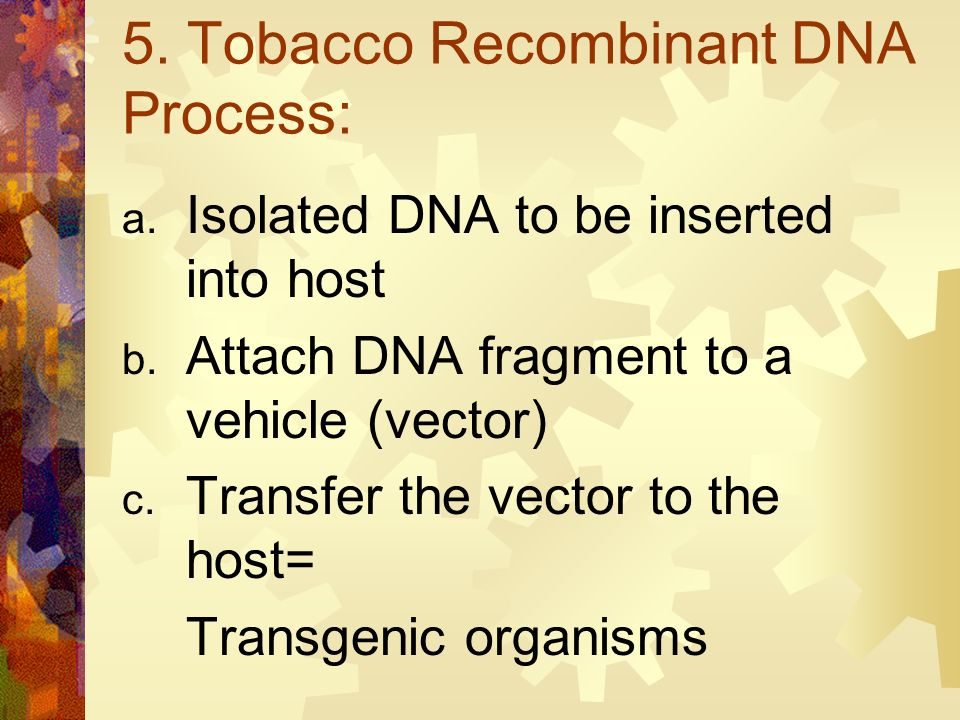 4. Transgenic Organism: trans = across genic = race Contains genes from another organism Bacteria Virus Human