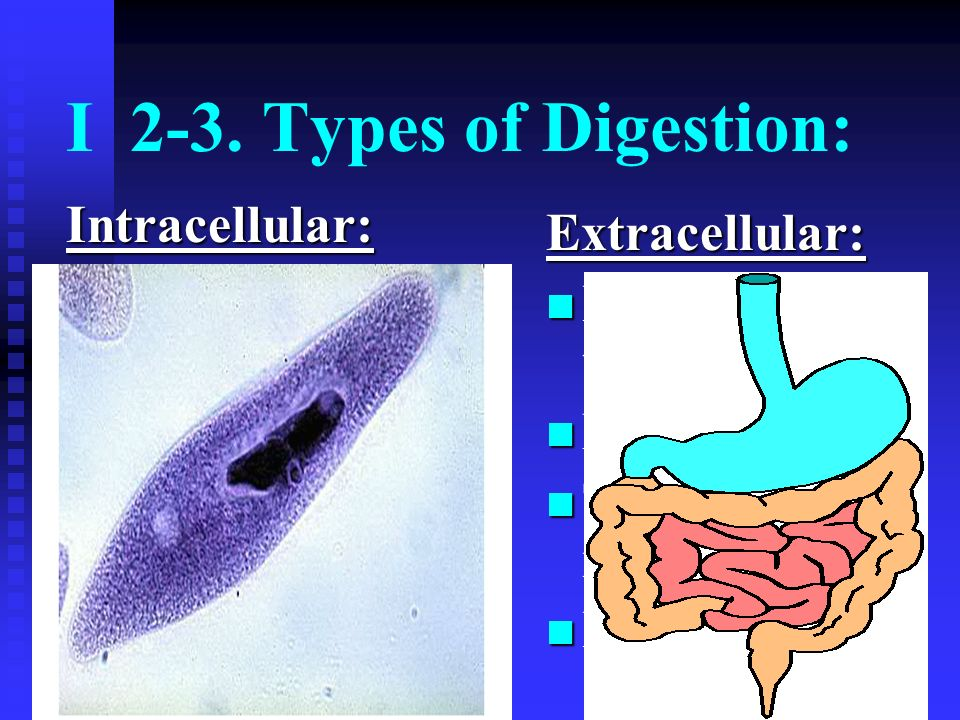 9. Appendix: vestigial organ
