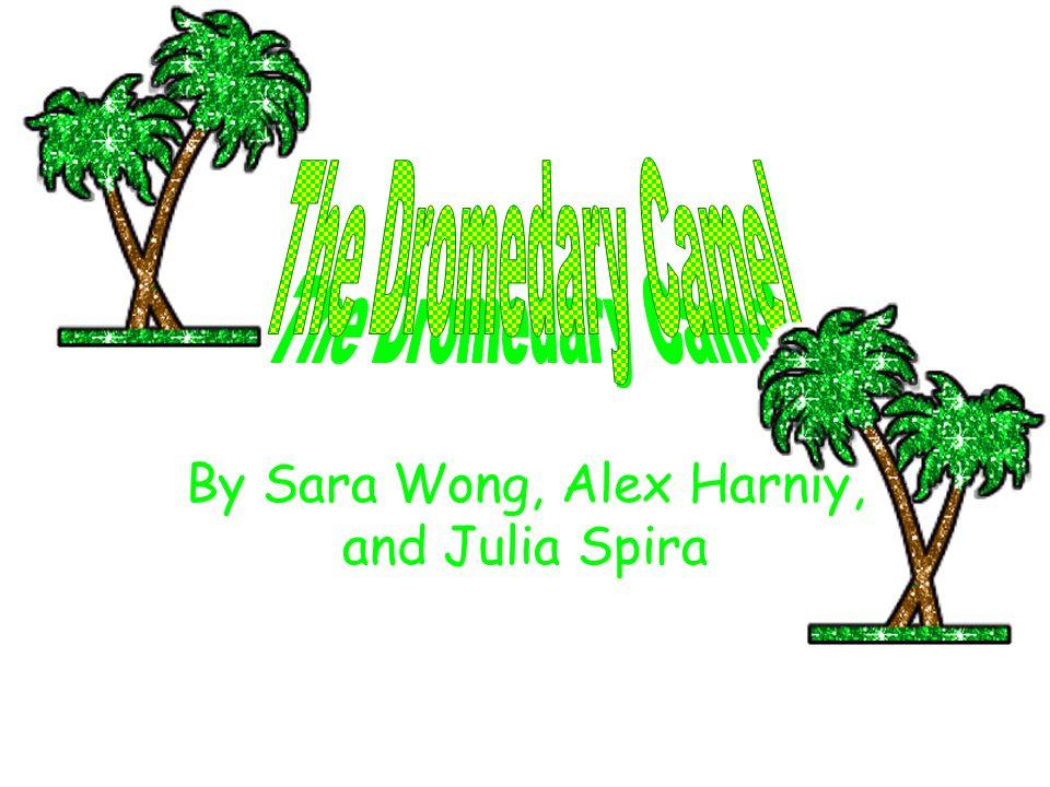 By Sara Wong, Alex Harnly, and Julia Spira