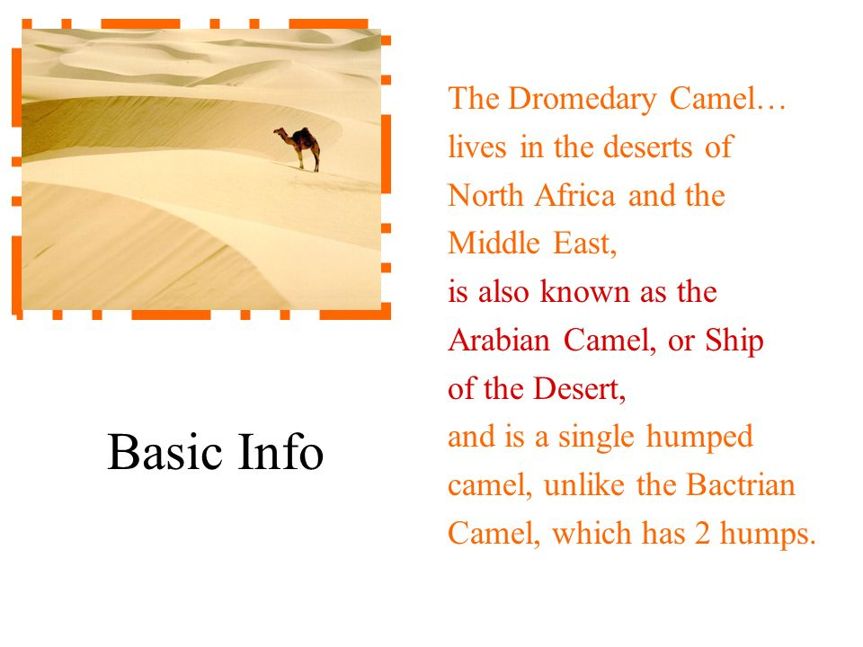 Basic Info The Dromedary Camel… lives in the deserts of North Africa and the Middle East, is also known as the Arabian Camel, or Ship of the Desert, a