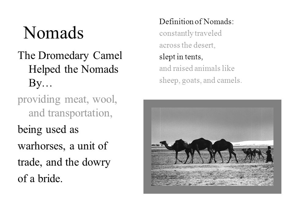 Nomads Definition of Nomads: constantly traveled across the desert, slept in tents, and raised animals like sheep, goats, and camels.