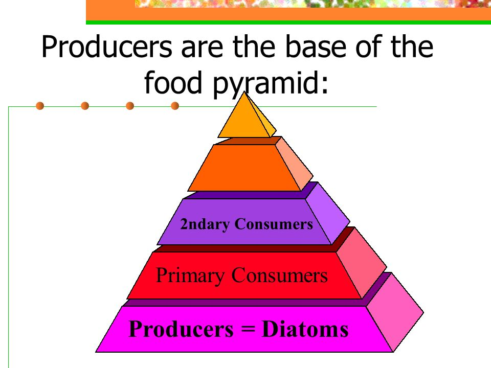 Diatoms: Basis of the food chain=producers