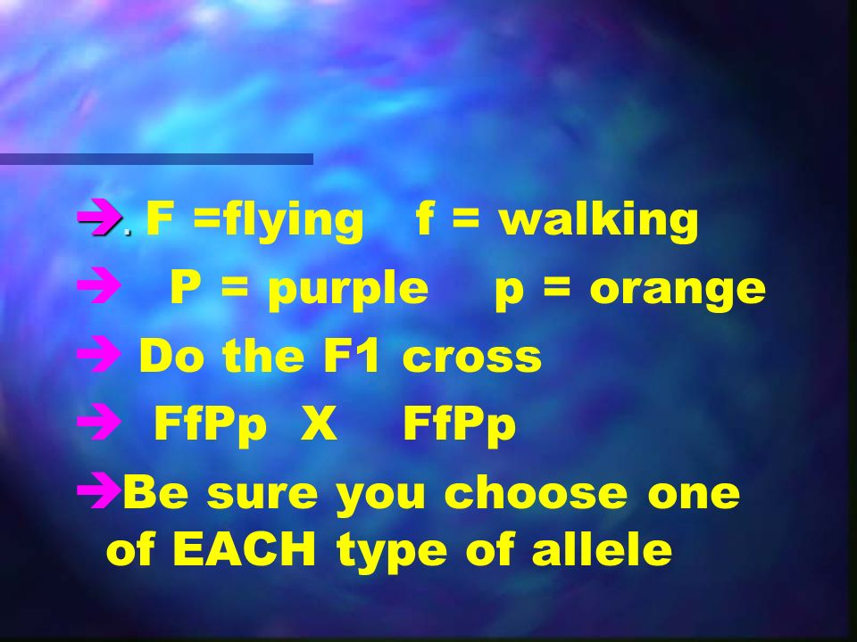 .. F =flyingf = walking è è P = purple p = orange è è Do the F1 cross è è FfPp X FfPp è è Be sure you choose one of EACH type of allele