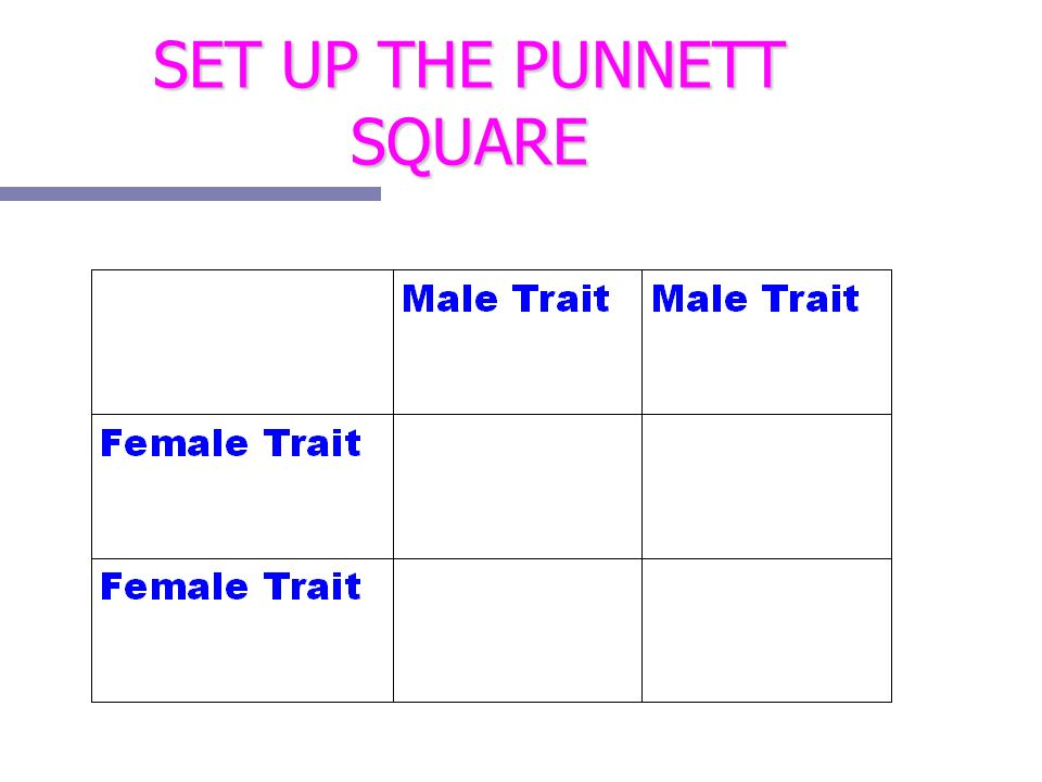 SET UP THE PUNNETT SQUARE