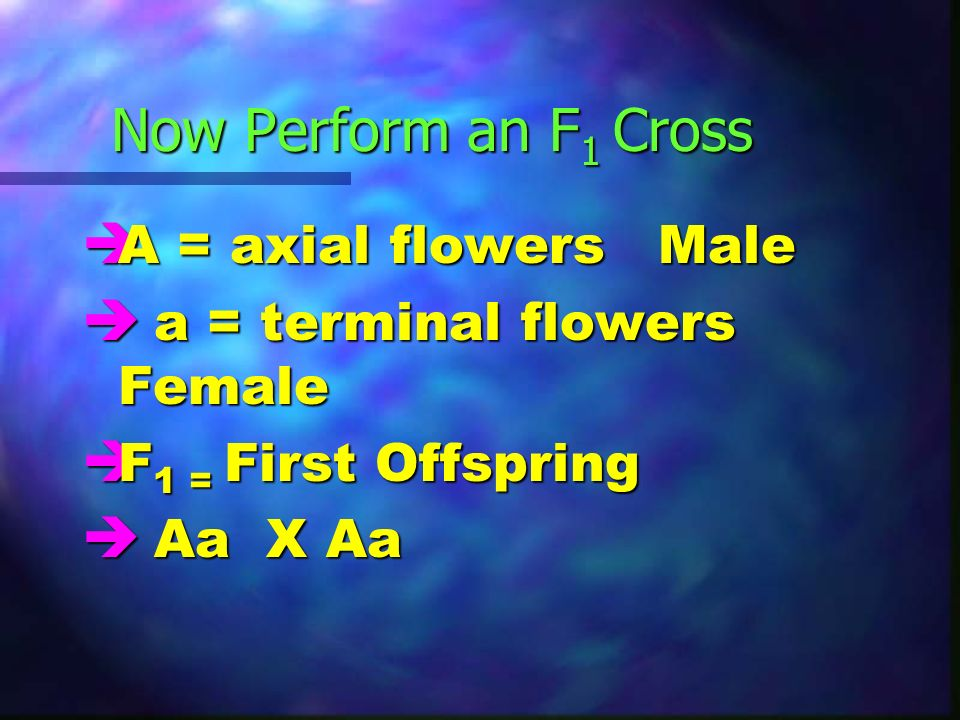 Now Perform an F 1 Cross è A = axial flowersMale è a = terminal flowers Female è F 1 = First Offspring è Aa X Aa