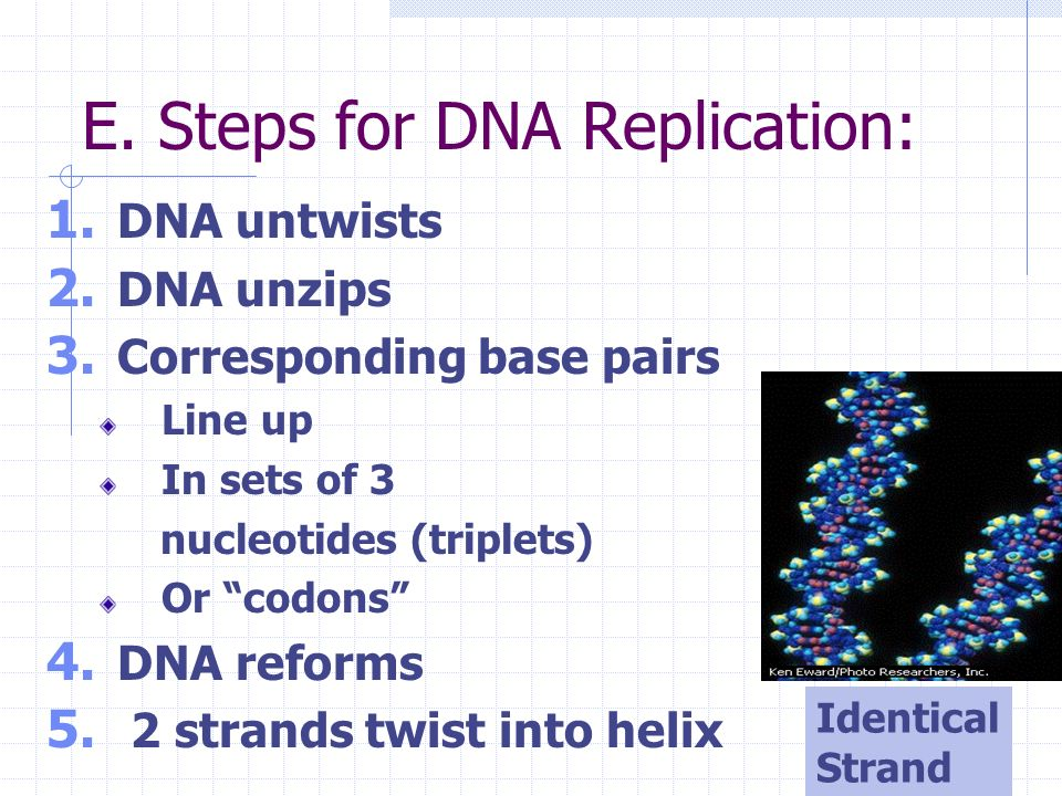 DNA Replication Chromosomes double Mitosis Late Interphase 2n to 4n 2N