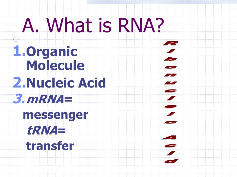 RNA Ribonucleic Acid DNA messenger & taxi II. RNA Structure & Function