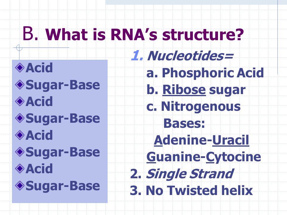B. Where is RNA located? 1. mRNA in nucleus & cytoplasm 2. tRNA only in cytoplasm mRNA tRNA
