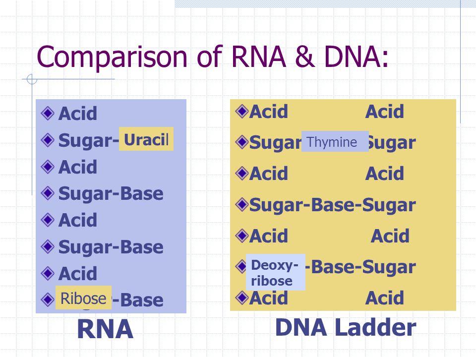B. What is RNAs structure? Acid Sugar-Base Acid Sugar-Base Acid Sugar-Base Acid Sugar-Base 1. Nucleotides= a. Phosphoric Acid b. Ribose sugar c. Nitro