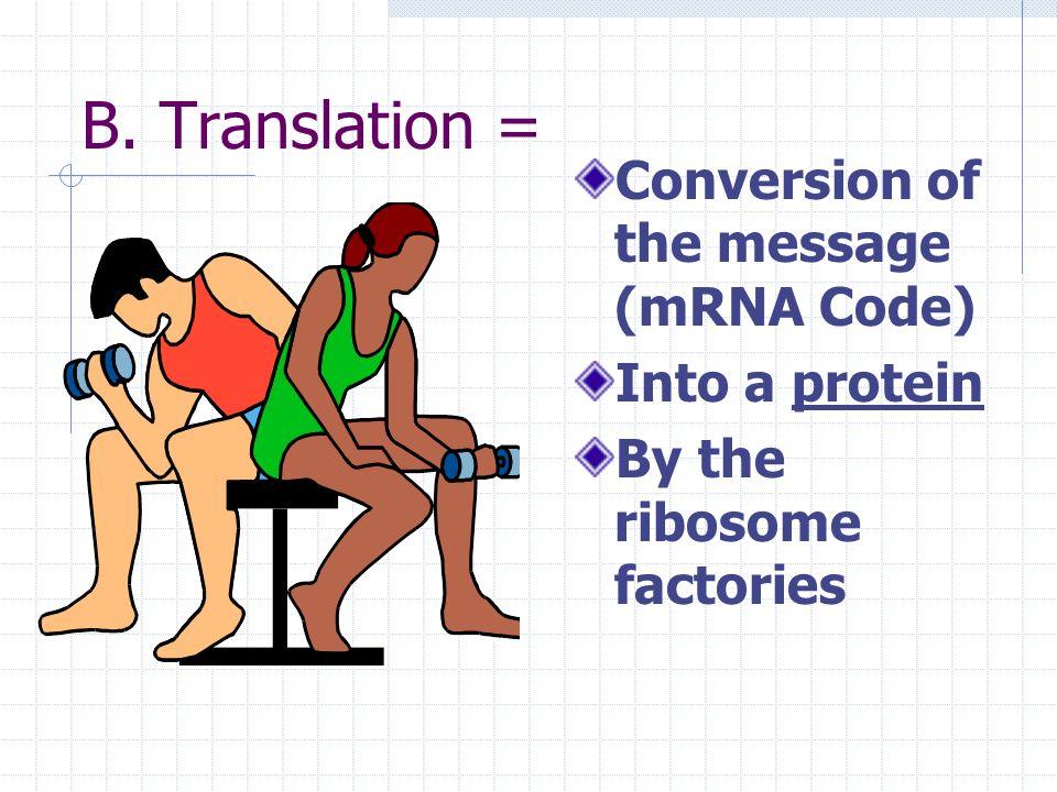 Transcription in The nucleus mRNA copy DNA