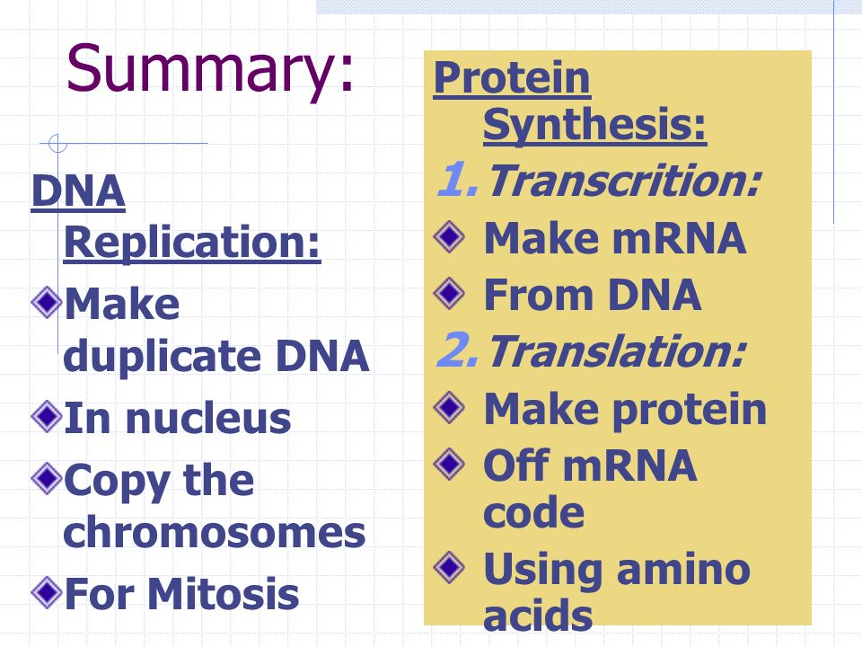 tRNA delivers amino acid 2. Peptide bond forms 3. tRNA leaves ribosome 4. Polypeptide Chain of amino acids grows
