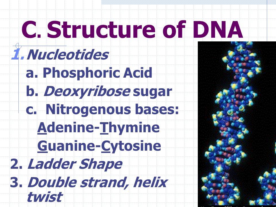 Chromosomes in Nucleus