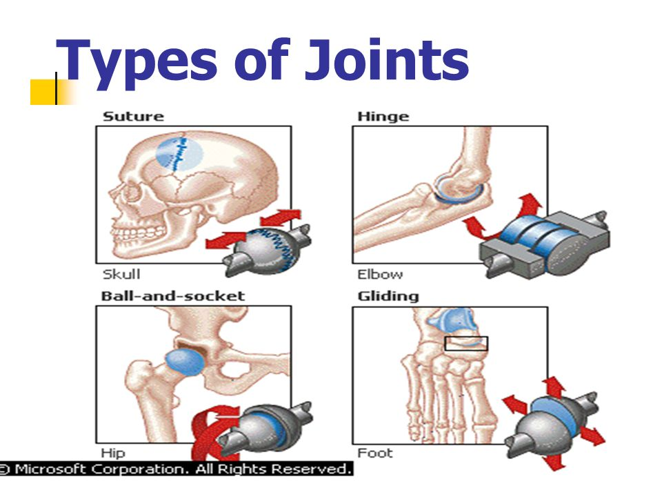Endoskeletons also have……. 1c. Ligaments that hold bone to bone 1d. Tendons that hold muscle to bone, muscle tenders 1e. Joints where 2 bones come tog