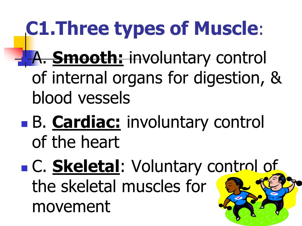 B3. The Support System Functions: Protection of organs Movement Stores calcium & potassium Produces RBC (marrow) Supports