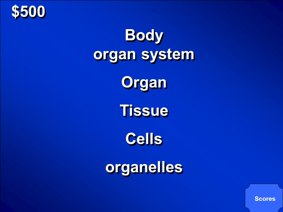 © Mark E. Damon - All Rights Reserved $500 What are the 6 levels of organization?